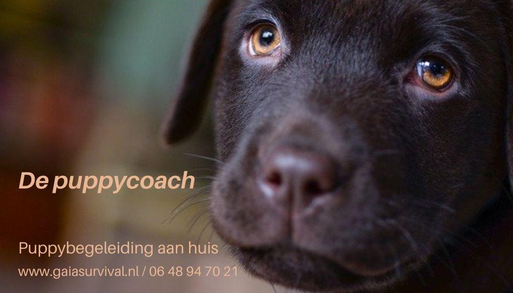 puppycoach